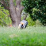 Honolulu Zoo 17 (1 of 1)