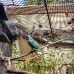 Honolulu Zoo 4 (1 of 1)