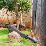 Honolulu Zoo 6 (1 of 1)