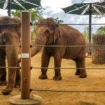 Honolulu Zoo 7 (1 of 1)